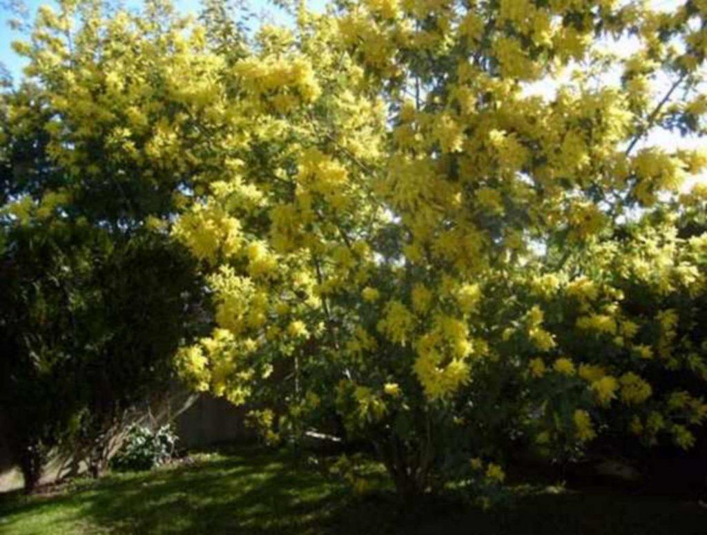 Jardin en mars Volets Bleus Sables d'Olonne maison